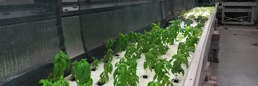 The Future of Food at Sir Guy Carleton Secondary School